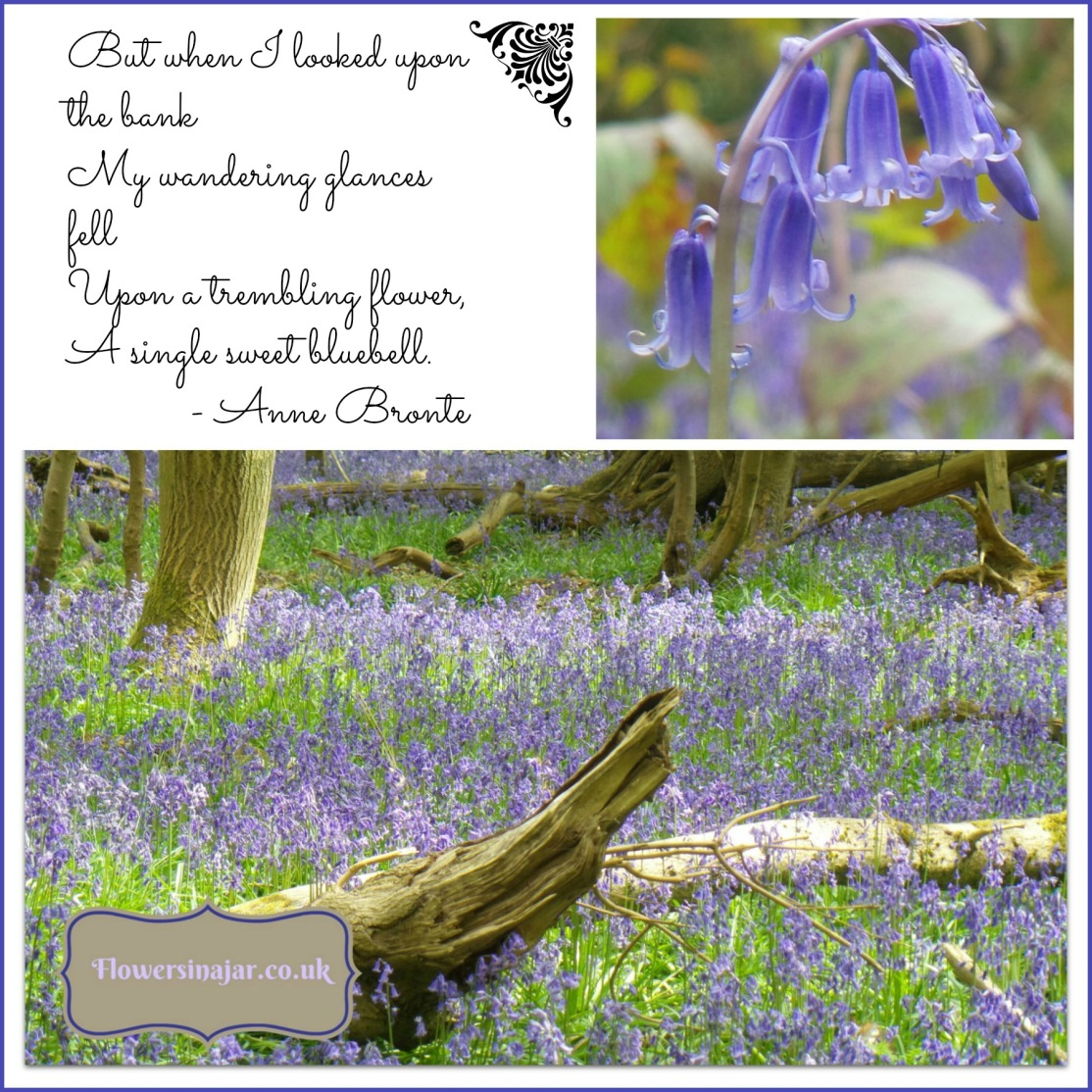 Bluebell-poem-anne-bronte-fleet-Collage